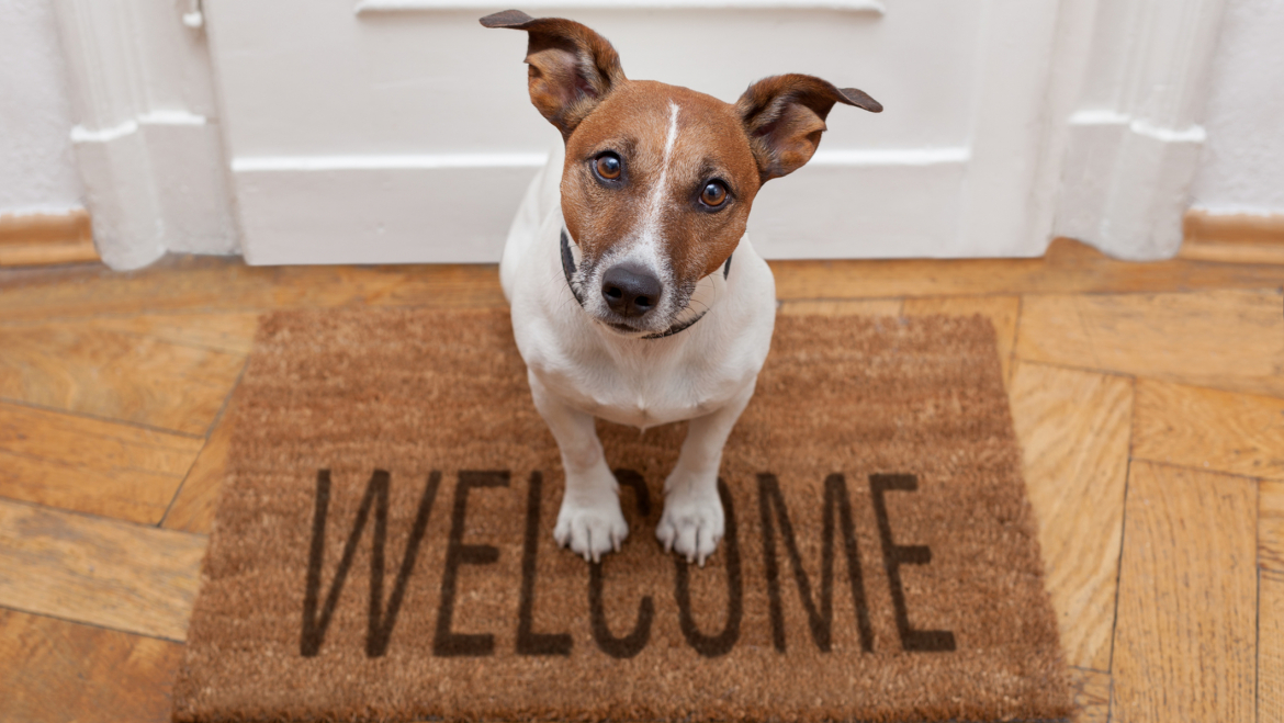 Should I allow Pets in my property ?